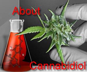 Cannabidiol Oil Wiki Review